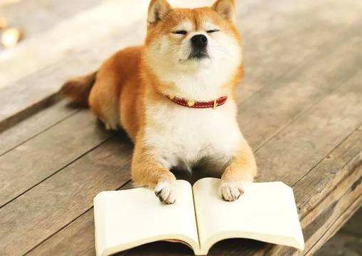 华中农业大学成人高考动物医学专业可以考兽医证吗